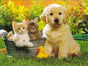 soins énergétiques pour animaux